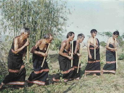 Người Triêng với cây đinh tút