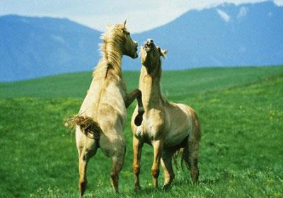 Ngựa quen đường cũ