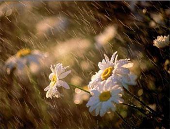 Tháng giêng mưa bụi