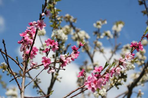 Xuân trong thơ Việt ở Đức
