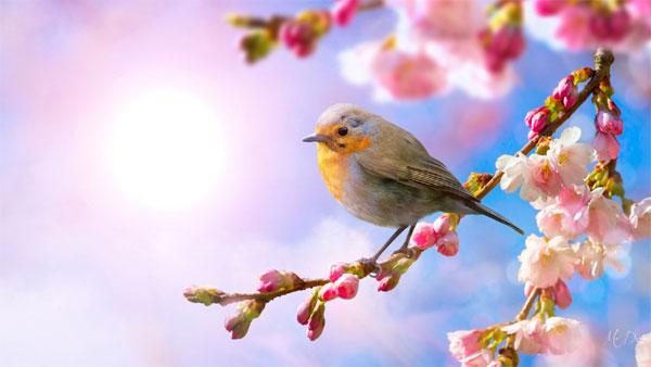 Hương sắc mùa xuân