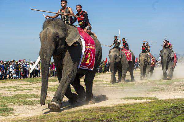 Đến Tây Nguyên xem lễ hội đua voi