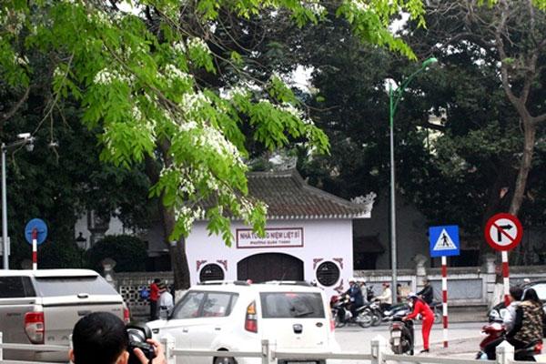 Phố phường Hà Thành lãng mạn sắc trắng hoa sưa