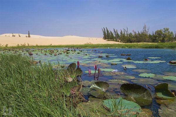 Huyền bí hồ Bàu Trắng lung linh giữa đồi cát hoang sơ