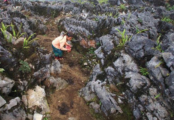 Sự sống nảy mầm bên những hốc đá Hà Giang