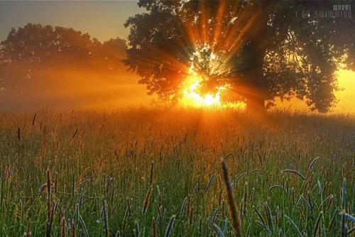 Giấc mơ cỏ mật