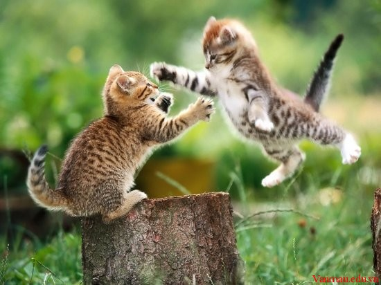 Đồng dao: Con Mèo
