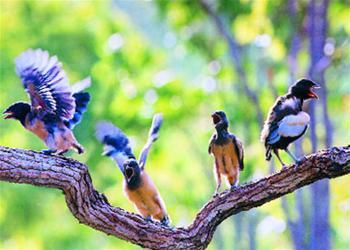 Chim xuất quân