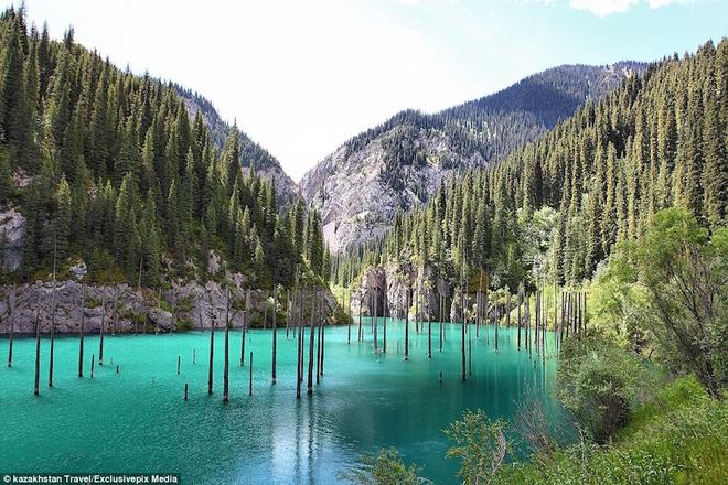 Rừng cây mọc ngược trong hồ nước ở Kazakhstan