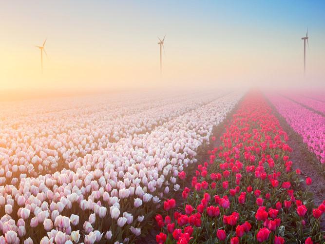 Chiêm ngưỡng vẻ đẹp những cánh đồng hoa mùa xuân