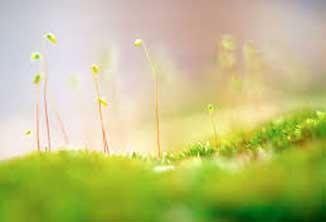 Hương cỏ dại