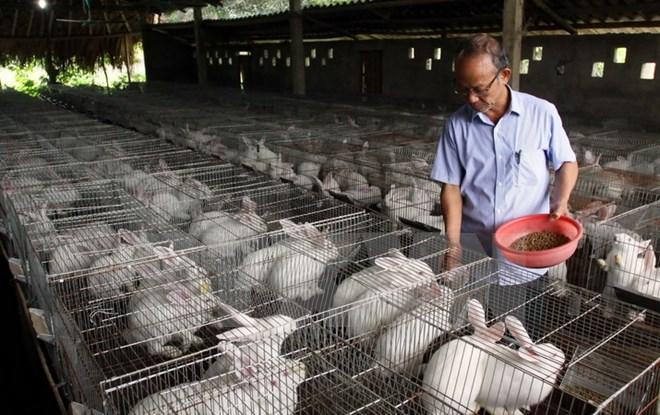 Sản xuất nông nghiệp công nghệ cao: Đào tạo nhân lực từ nông dân