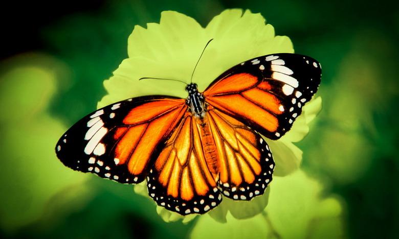 Tại sao loài bướm lại phải chui ra từ kén?