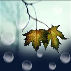 Lá rơi cắt gió mỏng dần