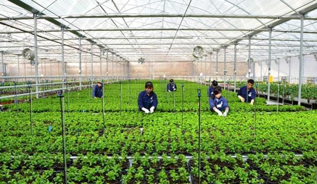 """Nông nghiệp công nghệ cao: Doanh nghiệp là """"đầu tàu"""" của chuỗi giá trị"""