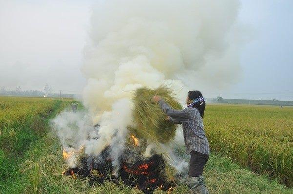 Vị mùa gặt