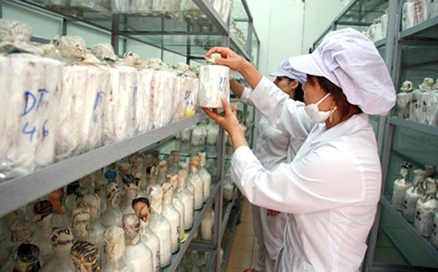 Ứng dụng kỹ thuật hạt nhân vào sản xuất nông nghiệp
