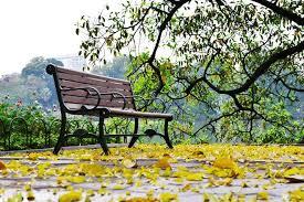 Khi mùa thu về phố