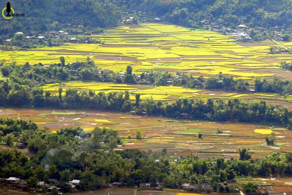 Mường Lò, cánh đồng lúa lớn thứ hai Tây Bắc