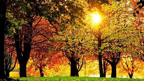 Âm điệu mùa thu