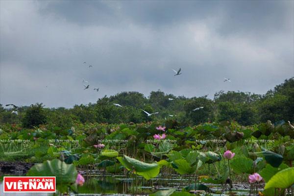 Ramsar Láng Sen hấp dẫn khách du lịch
