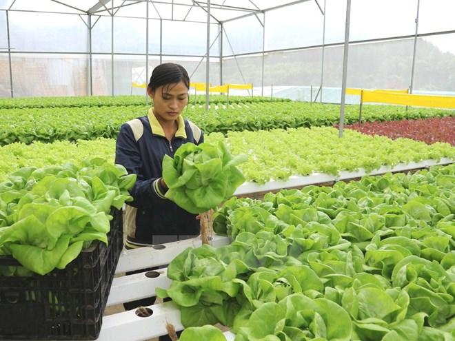 Tìm hướng phát triển nông nghiệp bền vững ứng dụng công nghệ cao