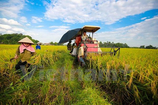 Khoa học công nghệ giúp năng suất lúa Việt Nam đứng đầu ASEAN
