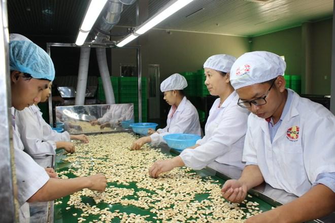 Hiệp hội Điều Việt Nam hỗ trợ Campuchia tăng sản lượng lên 1 triệu tấn