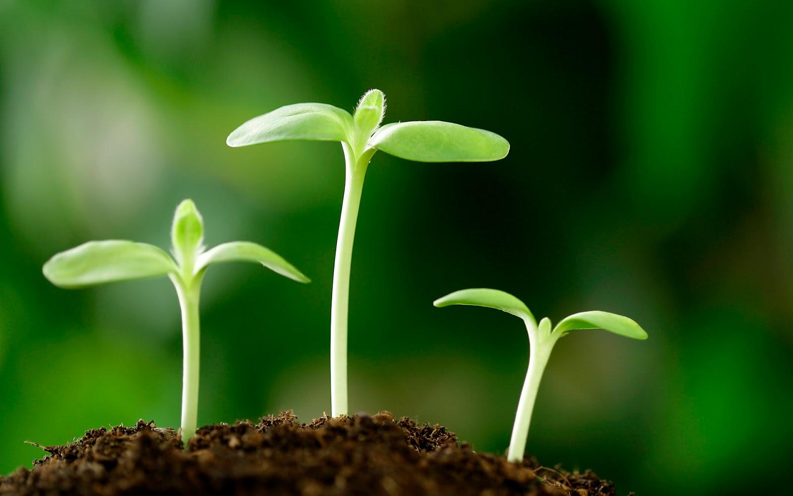 Mùa gieo hạt