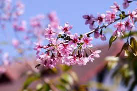 Em ơi mùa xuân đến