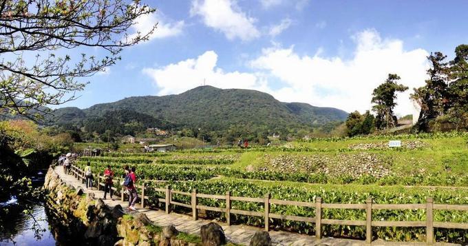 Những điểm ngắm hoa anh đào hot nhất ở Đài Loan năm 2018