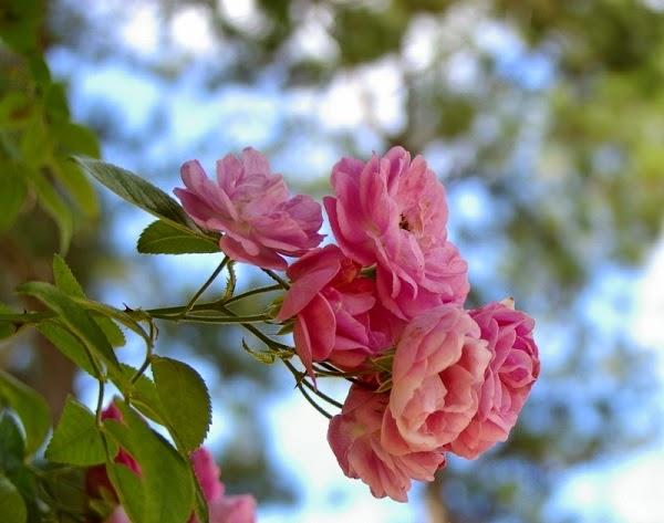 Bông hoa tình mẹ
