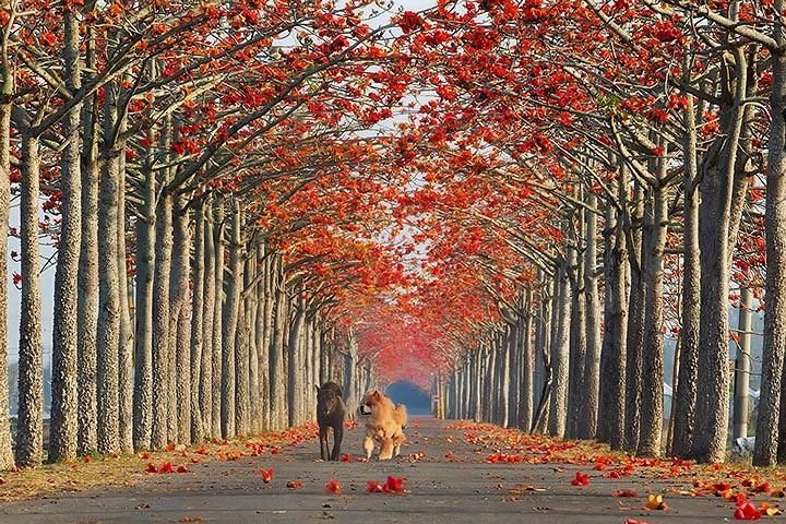 Những con đường đẹp như tranh vẽ trên khắp thế giới