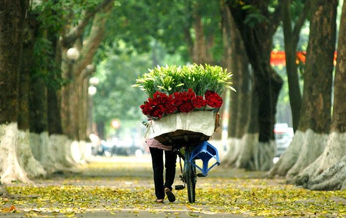 Hà Nội mùa hoa loa kèn