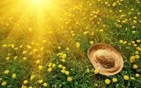 Bâng khuâng mùa hạ