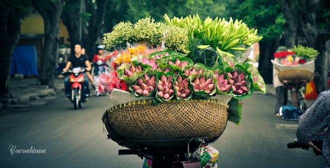 Hoa sen lên phố cổ