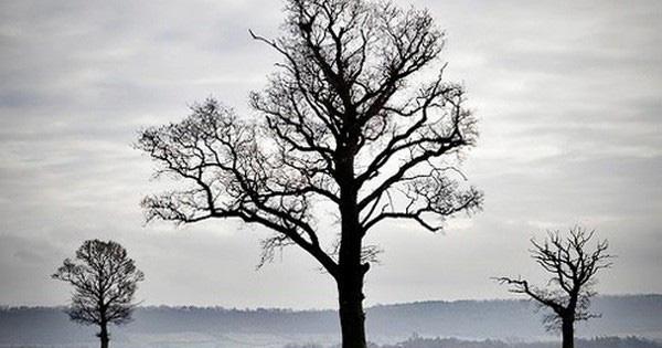 Chuyện ba cái cây và bài học cuộc sống ý nghĩa: Đừng vội từ bỏ ước mơ khi bạn chưa trải qua sóng gió