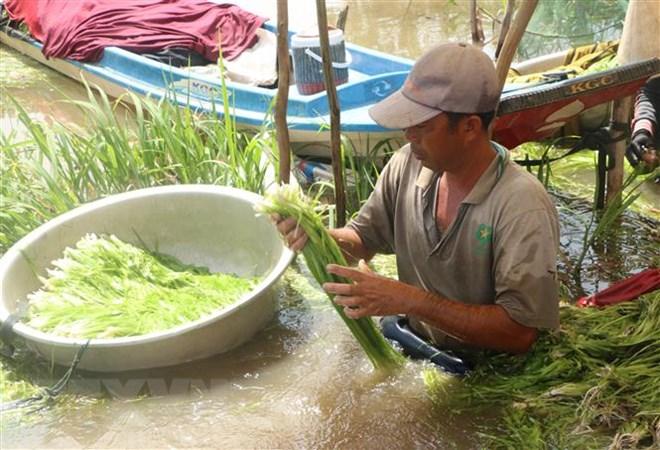 Mùa nước nổi tôm cá đầy đồng, người dân miền Tây rộn rã mưu sinh