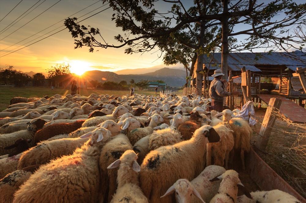 Kiếm tìm giấc mộng du mục trên đồng cừu An Hòa