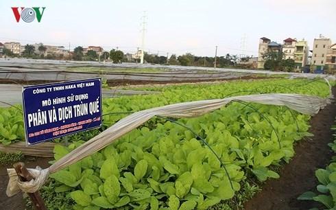 Nông nghiệp hữu cơ rất cần những nguồn gen quý