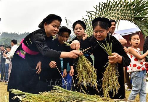 Đặc sắc lễ hội giã cốm của người Tày ở vùng cao Côn Lôn