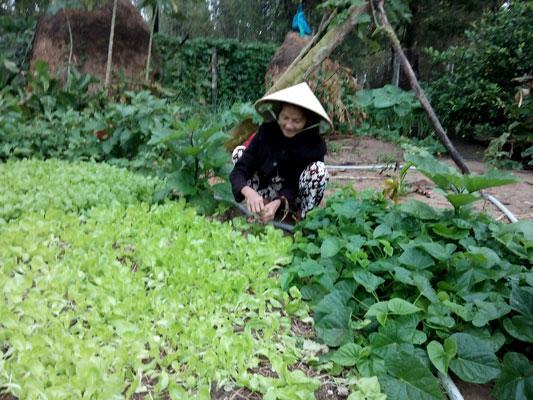 Nhớ vườn rau của mẹ