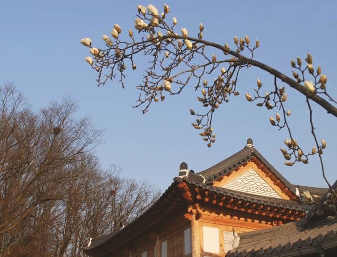 Các bức ảnh khiến bạn phải lòng với Hàn Quốc