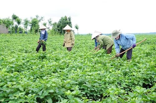 Con đường đưa nông sản Việt Nam tiếp cận thị trường khó tính