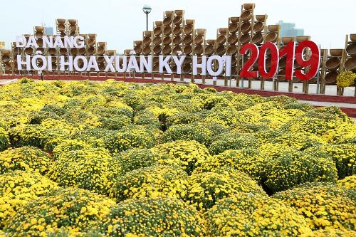 Cầu Vàng xuất hiện trên đường hoa Tết bên sông Hàn