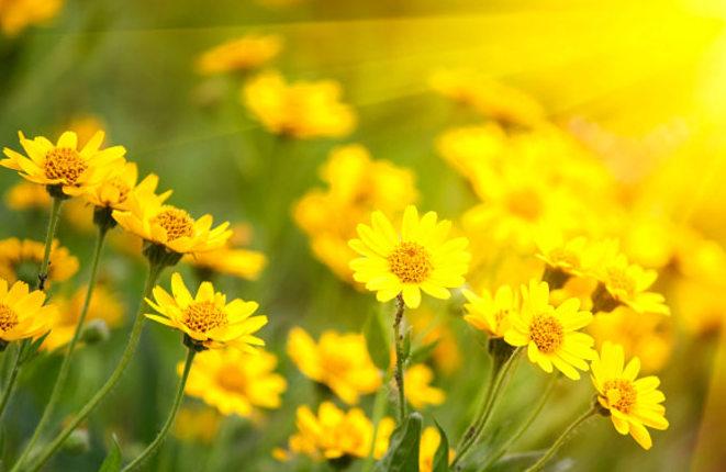 Tự sự với mùa xuân...