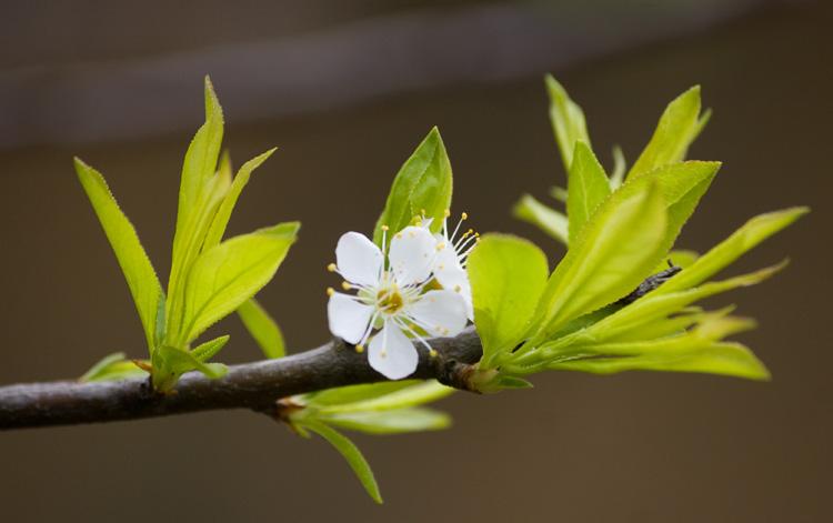 Phía ấy mùa xuân