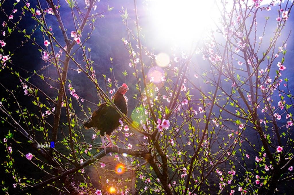 Sợi nắng xuân