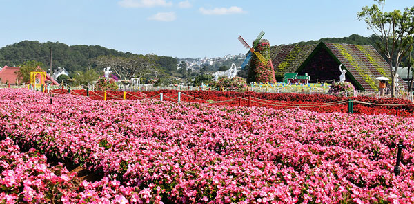 Thêm cánh đồng hoa giữa Làng hoa Vạn Thành
