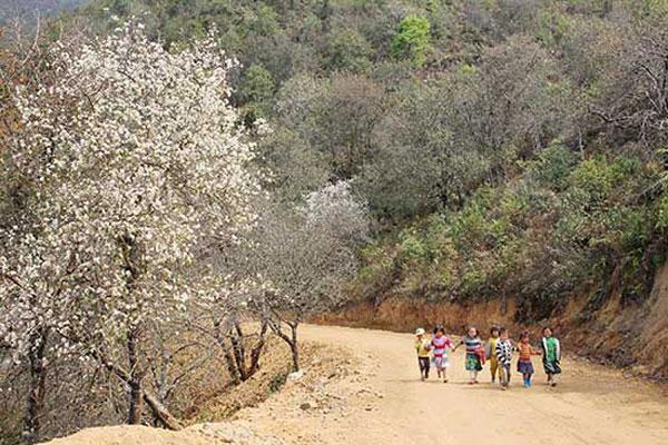 Ngọc Chiến - mùa hoa sơn tra